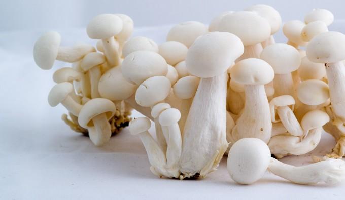 koolen-champignons.com