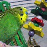 Speelgoed voor vogel maken