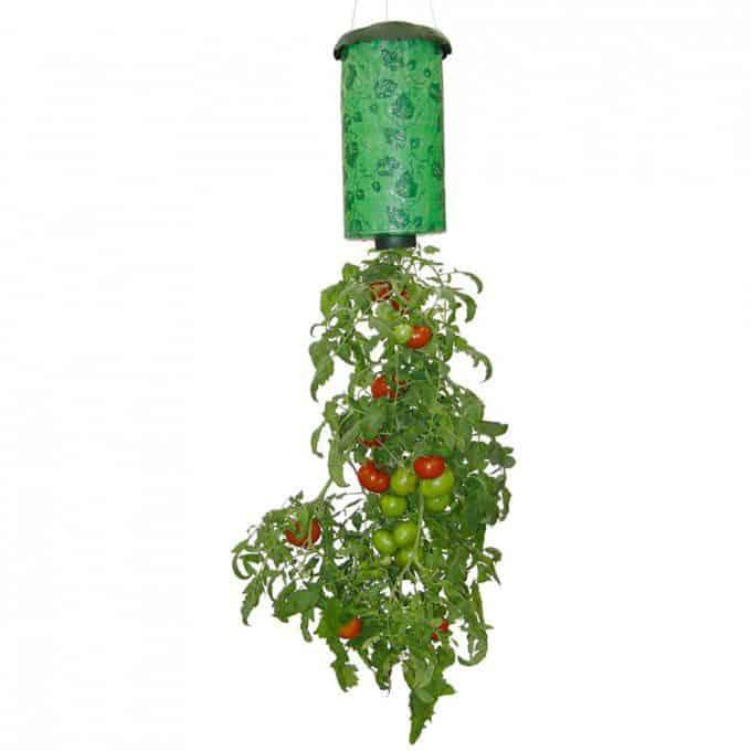 hanging basket met tomaten
