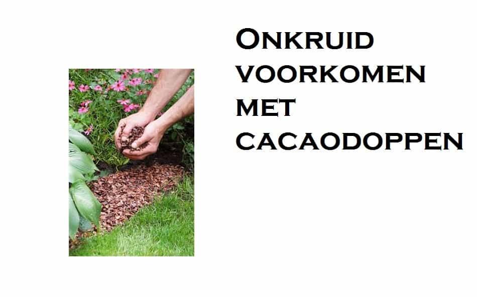 Onkruid voorkomen met cacaodoppen