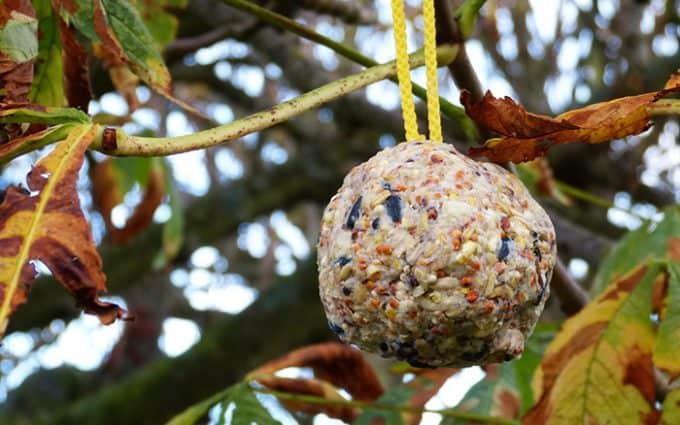 Vetbollen maken voor vogels in de winter
